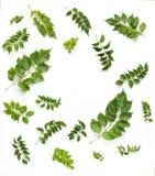 Marco redondo con las hojas del verde aisladas en el fondo blanco Imagen de archivo