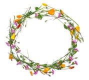 Marco redondo de flores delicadas Amarillo de la primavera, púrpura, flores rosadas en el fondo blanco Foto de archivo libre de regalías