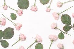 Marco redondo de flores rosadas en el fondo blanco Fotos de archivo libres de regalías