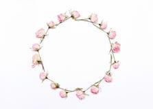 Marco redondo de flores rosadas en el fondo blanco Fotografía de archivo libre de regalías
