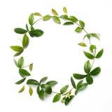 Marco redondo del círculo hecho de ramas y de hojas verdes en el fondo blanco Endecha plana, visión superior imagenes de archivo
