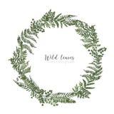 Marco redondo, frontera o guirnalda circular hechos de helechos hermosos, hierbas salvajes o plantas herbáceas verdes aisladas en stock de ilustración