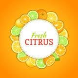 Marco redondo integrado por la fruta anaranjada tropical deliciosa del limón de la cal Ejemplo de la tarjeta del vector Naranjas  Imagen de archivo