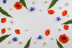 Marco rojo de las amapolas de campo, de las margaritas, de los acianos y de las hojas del verde en el fondo blanco Fotografía de archivo