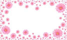 Marco rosado de la flor en el fondo blanco Imagen de archivo libre de regalías