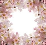 Marco rosado del flor Foto de archivo