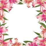 Marco rosado hermoso de la frontera del lirio Ramo de flores Impresi?n floral Dibujo del marcador stock de ilustración