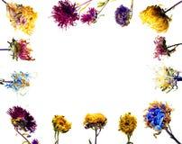 Marco secado de la flor imagenes de archivo