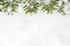 Marco Spruce en fondo de la nieve Foto de archivo