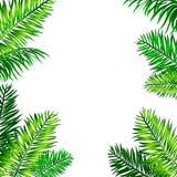 Marco tropical con las hojas de palma y espacio para su texto SK azul Imagenes de archivo