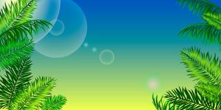 Marco tropical con las hojas de palma y espacio para su texto SK azul Foto de archivo