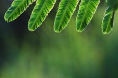 Marco tropical de las hojas. Foto de archivo libre de regalías