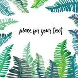 Marco tropical de las hojas del verde y de la turquesa con el lugar para su texto Ilustración del vector en el fondo blanco Fotografía de archivo libre de regalías