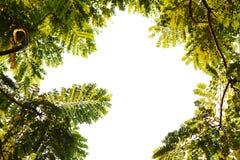 Marco tropical del bosque Imagen de archivo libre de regalías