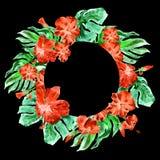 Marco tropical del círculo con el hibisco y adorno tropical pintado a mano del verano de la acuarela de Monstera con el hibisco Imagenes de archivo