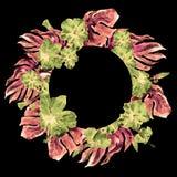 Marco tropical del círculo con el hibisco y adorno tropical pintado a mano del verano de la acuarela de Monstera con el hibisco Fotografía de archivo