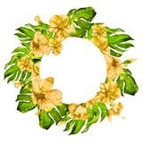 Marco tropical del círculo con el hibisco y adorno tropical pintado a mano del verano de la acuarela de Monstera con el hibisco Foto de archivo