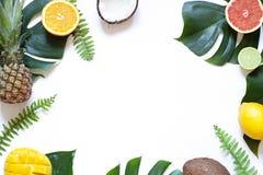Marco tropical del concepto del verano de las hojas y de las frutas en el fondo blanco fotos de archivo libres de regalías