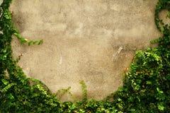 Marco vacío de la pared de la hierba verde como fondo Fotos de archivo