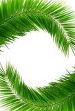Marco verde Imagen de archivo