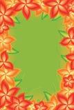 Marco verde claro de la flor Imagen de archivo
