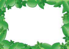 Marco verde con las hojas Fotos de archivo libres de regalías