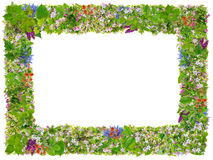Marco verde de la foto de la paz de Pascua Foto de archivo