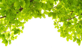 Marco verde de la hoja Foto de archivo libre de regalías