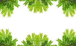 Marco verde de la hoja Fotografía de archivo