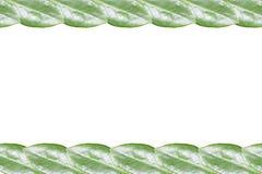 Marco verde de la hoja aislado Imágenes de archivo libres de regalías