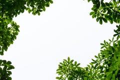 Marco verde de la hoja con el espacio aislado de la copia Imagenes de archivo