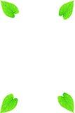 Marco verde de la hoja del corazón Fotografía de archivo