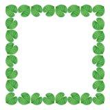 Marco verde de la hoja en el fondo blanco Imágenes de archivo libres de regalías