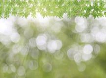 Marco verde de la hoja en fondo de la naturaleza Fotografía de archivo libre de regalías