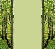 Marco verde del bosque Fotografía de archivo