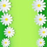 Marco verde floral con la flor de la manzanilla 3d Fotos de archivo libres de regalías