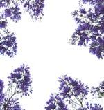 Marco violeta de las flores Foto de archivo libre de regalías