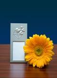 Marco y flor de la foto Imágenes de archivo libres de regalías
