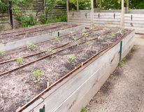 Marcos de jardín levantados Foto de archivo
