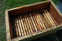 Marcos de la abeja Foto de archivo