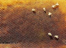 Marcos de la abeja con las abejas Fotografía de archivo libre de regalías