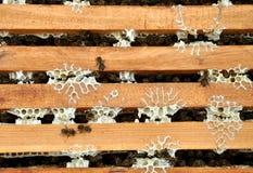 Marcos de la abeja con las abejas Imagenes de archivo
