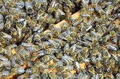 Marcos de la abeja con las abejas Foto de archivo