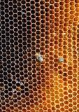 Marcos de la abeja con las abejas Fotografía de archivo