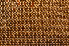 Marcos de la abeja con la miel Fotos de archivo libres de regalías
