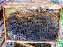 Marcos de la cera después de bombear la miel de ellos foto de archivo