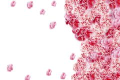 Marcos de la flor Fotografía de archivo libre de regalías