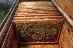 Marcos de madera con el panal en woodenbeehive abierta Recoja la miel Concepto de la apicultura imágenes de archivo libres de regalías
