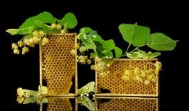 Marcos de madera con los panales de la abeja y las flores del tilo aislados en negro Foto de archivo
