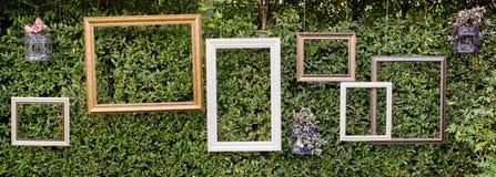 Marcos en blanco de la foto contra la pequeña pared verde del árbol Fotografía de archivo